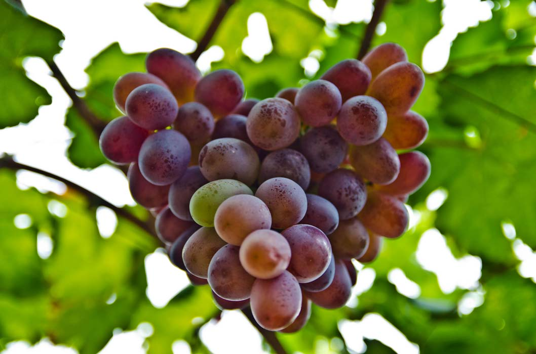 Resveratrol found in wine, grapes, and other fruits, vegetables, and herbs may help keep your heart healthy.